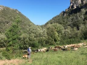 A Flock Grazes at La Casa Del Molí